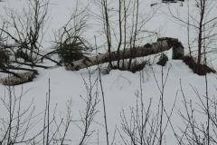 Baever-i-Norge / Beaver in Norway